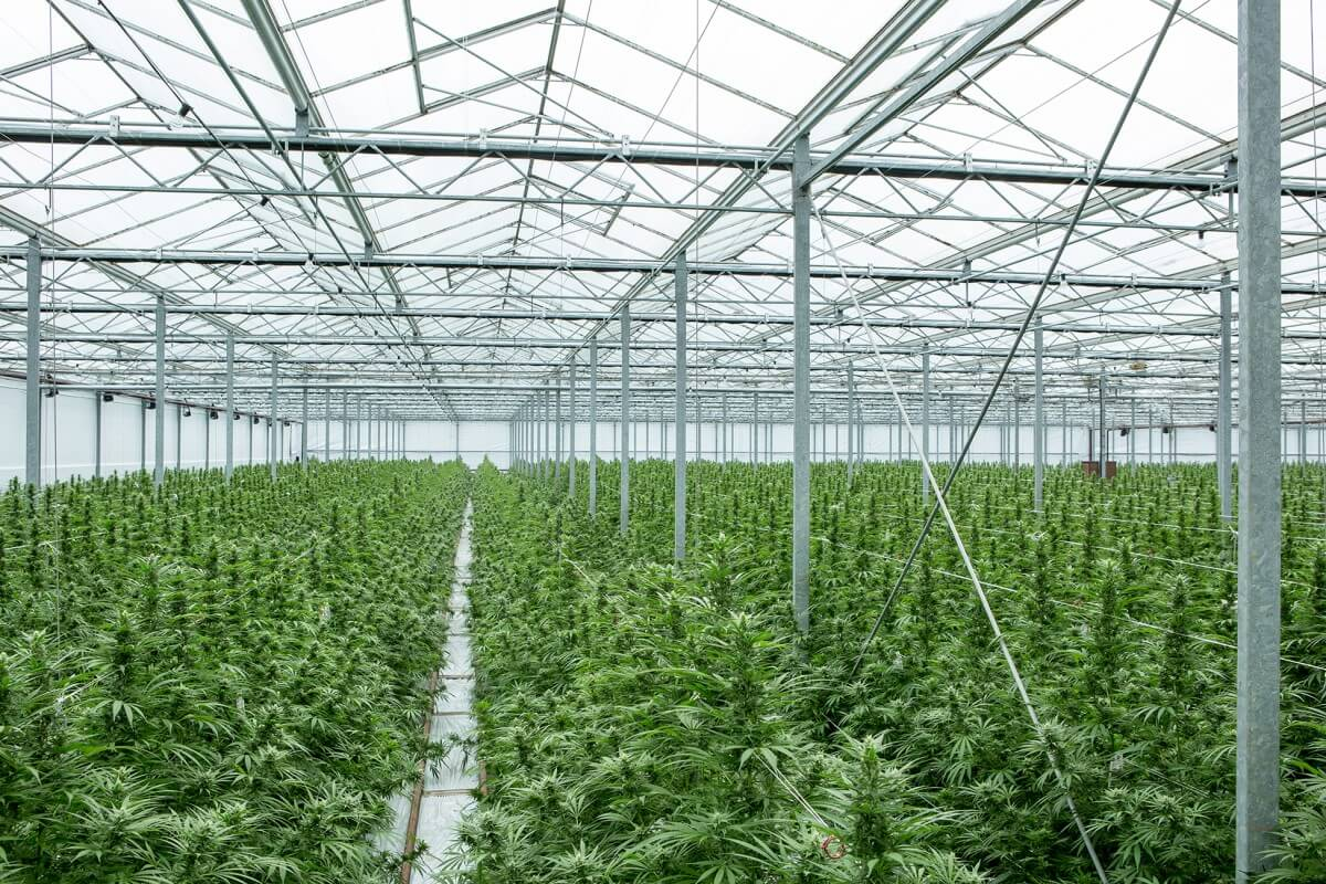 The Story of a Vietnamese Migrant Who Got Involved in Cannabis Farming in the UK