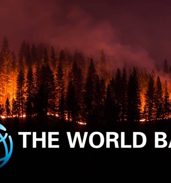 Indonesia Suffered $5.2bn Economic Loss Due to Man-made Forest Fires: World Bank